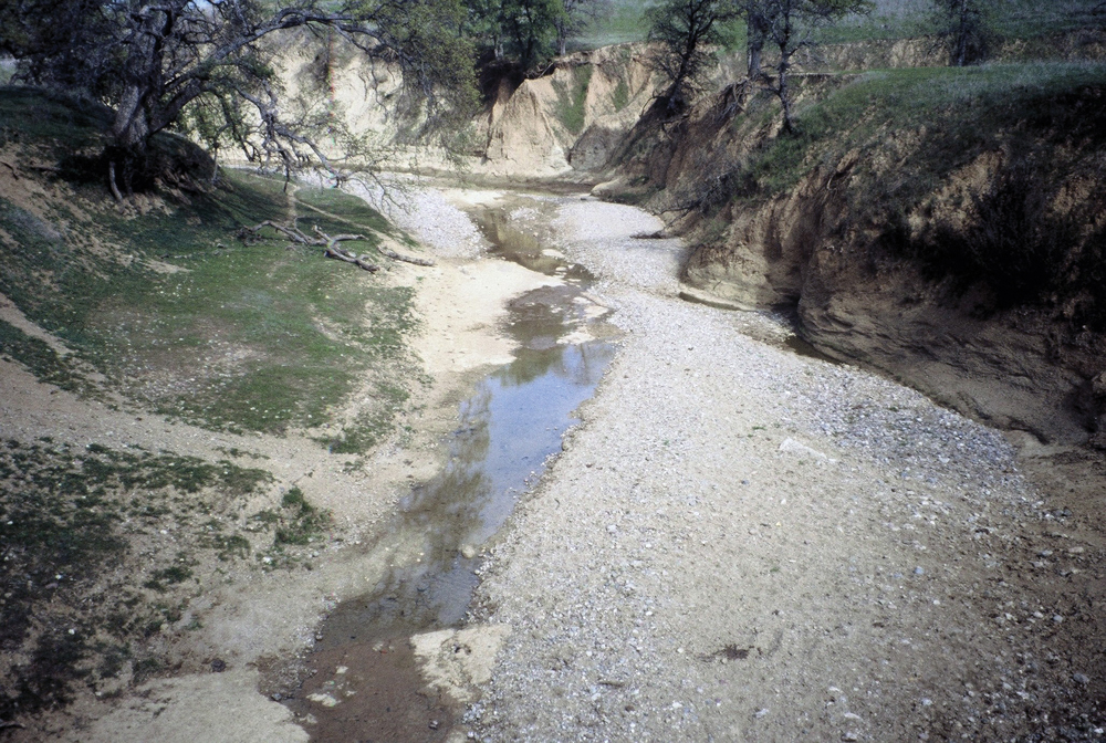 Lower Reeds Creek, entrenched channel and bedload