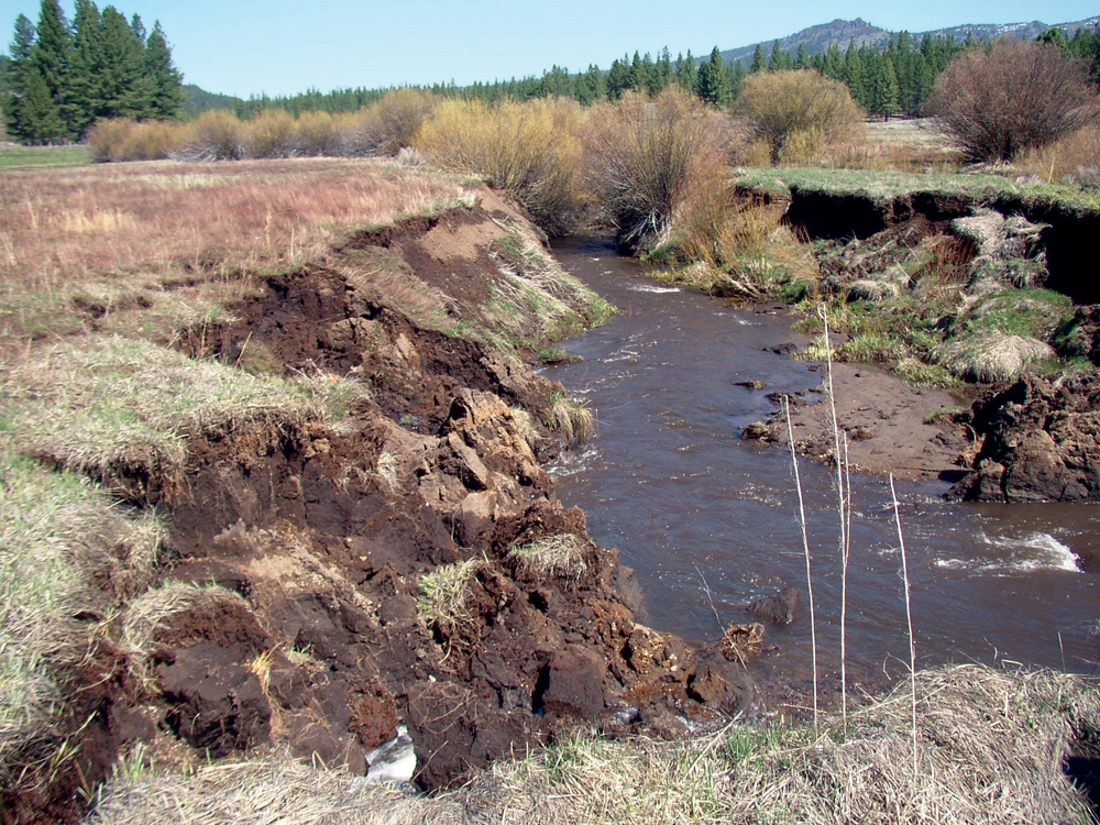 Channel erosion and entrenchment in Dixie Creek Meadows