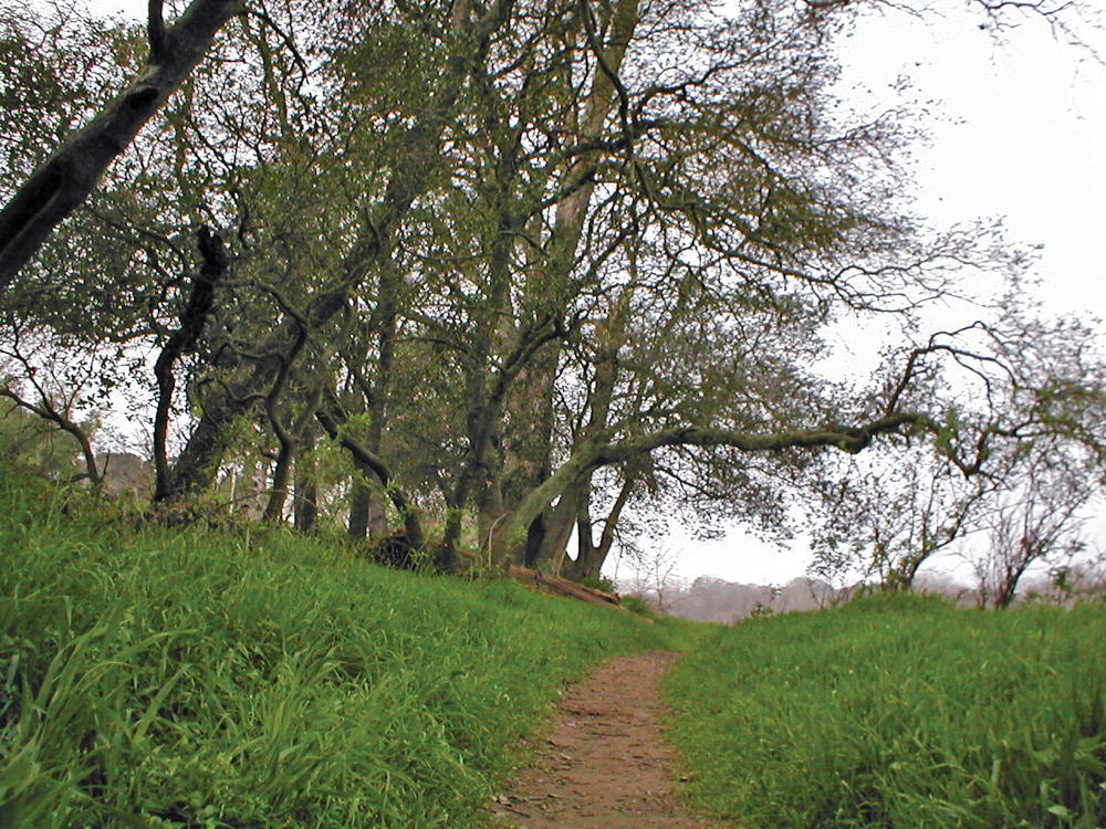 Trail on the American River Parkway